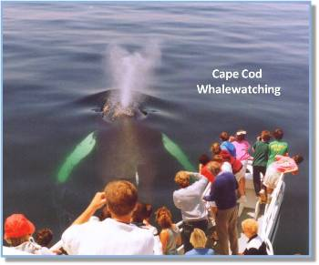 Students on Whale Watching Trip